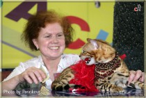 Бенгальский кот питомника Big Beng. Конкурс костюмов