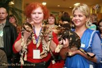 Бенгальские котята - лучший помет выставки клуба КОТОФЕЙ