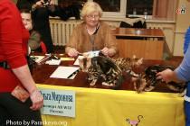 Котята питомника Big Beng - лучший помет выставки клуба КОТОФЕЙ