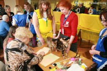 Котята питомника Бенгальских кошек Big Beng - лучший помет выставки клуба КОТОФЕЙ