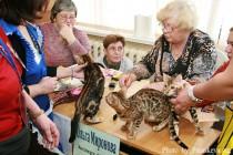 Котята питомника Бенгальских кошек Big Beng - лучший помет выставки