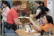 Best of Best Junior-бенгальская кошка питомника Big Beng