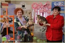 бенгальский котенок питомника Big Beng на выставке клуба Котофей