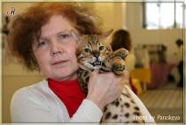 бенгальский котенок питомника Olimpus  Big Beng на выставке клуба Вариета