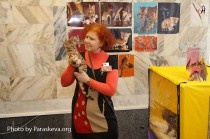 бенгальский кот питомника CAnon  Big Beng на выставке клуба Вариета