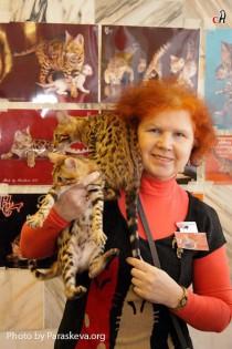 бенгальские котята питомника  Big Beng на выставке клуба  Котофей