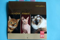 Кошки питомника Big Beng в печати. Фотограф-анималист Parskeva.