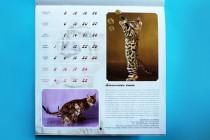 Кошки питомника BIG BENG в календаре