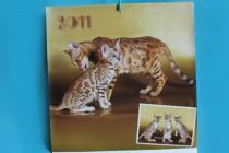 Бенгальские кошки  питомника Big Beng. Фотограф-анималист Parskeva.