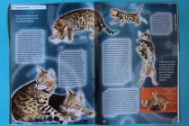 Бенгальские кошки в печати. Фотограф-анималист Parskeva.