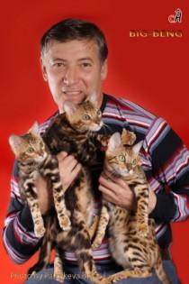 помет бенгальских котят
