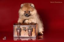 Фото собак. Фотограф-анималист Paraskeva.