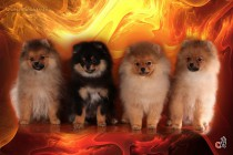 Профессиональное фото собак. Фотограф-анималист Paraskeva.