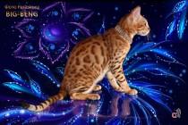 бенгальские котята бенгальские коты бенгальские котята big-beng