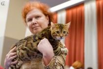 cats-show-wcf-29-12-13-spb-www-coonplanet-ru-026