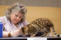 cats-show-wcf-29-12-13-spb-www-coonplanet-ru-056