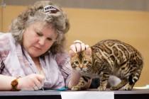 cats-show-wcf-29-12-13-spb-www-coonplanet-ru-057