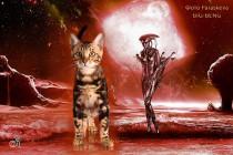 котенок окраса черное золото