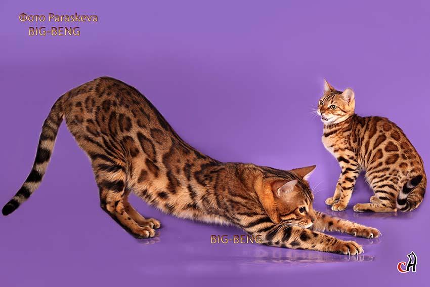 best flea medicine for indoor cats