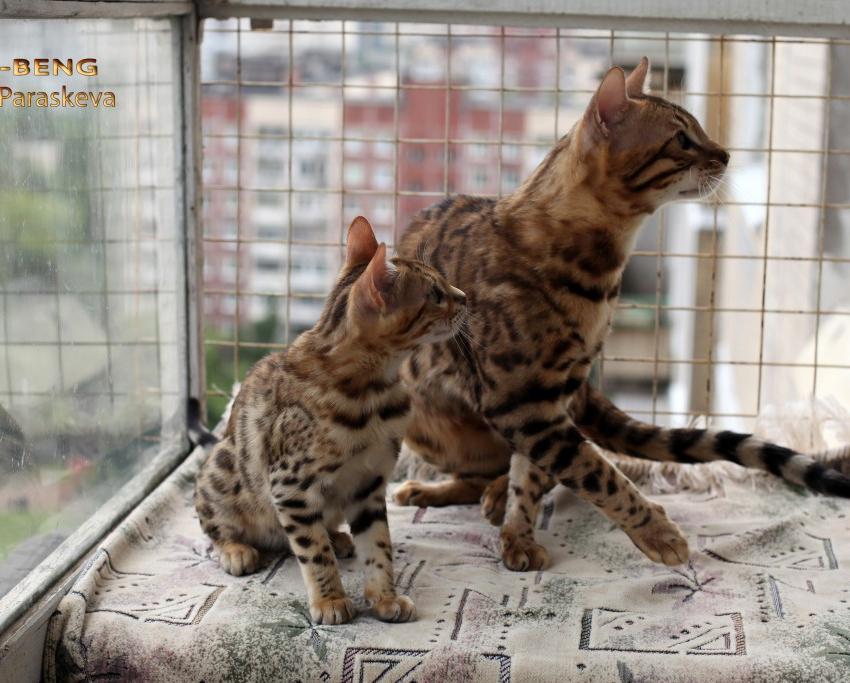Игры котят